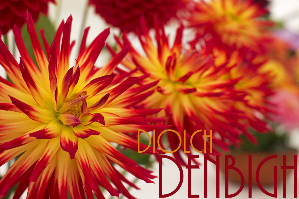 Diolch Denbigh blog title photo, red and yellow flowers showing the flower competition.