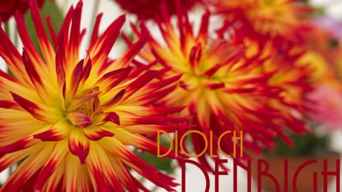 Diolch Denbigh